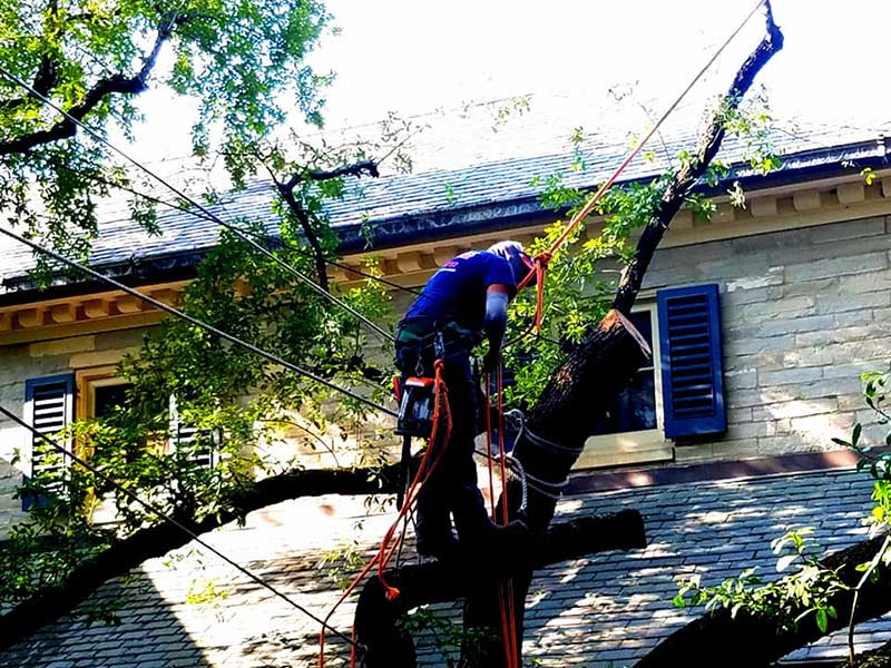emergency tree services san antonio