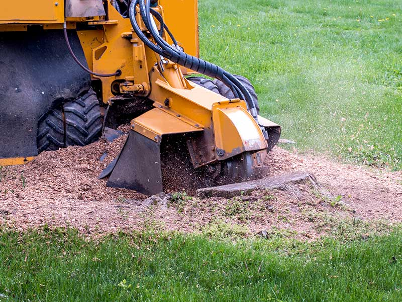 stump grinding and removal san antonio