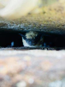 bat removal service in Muskegon