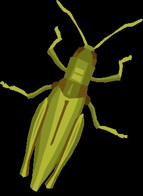 Feldgefluester Insekt