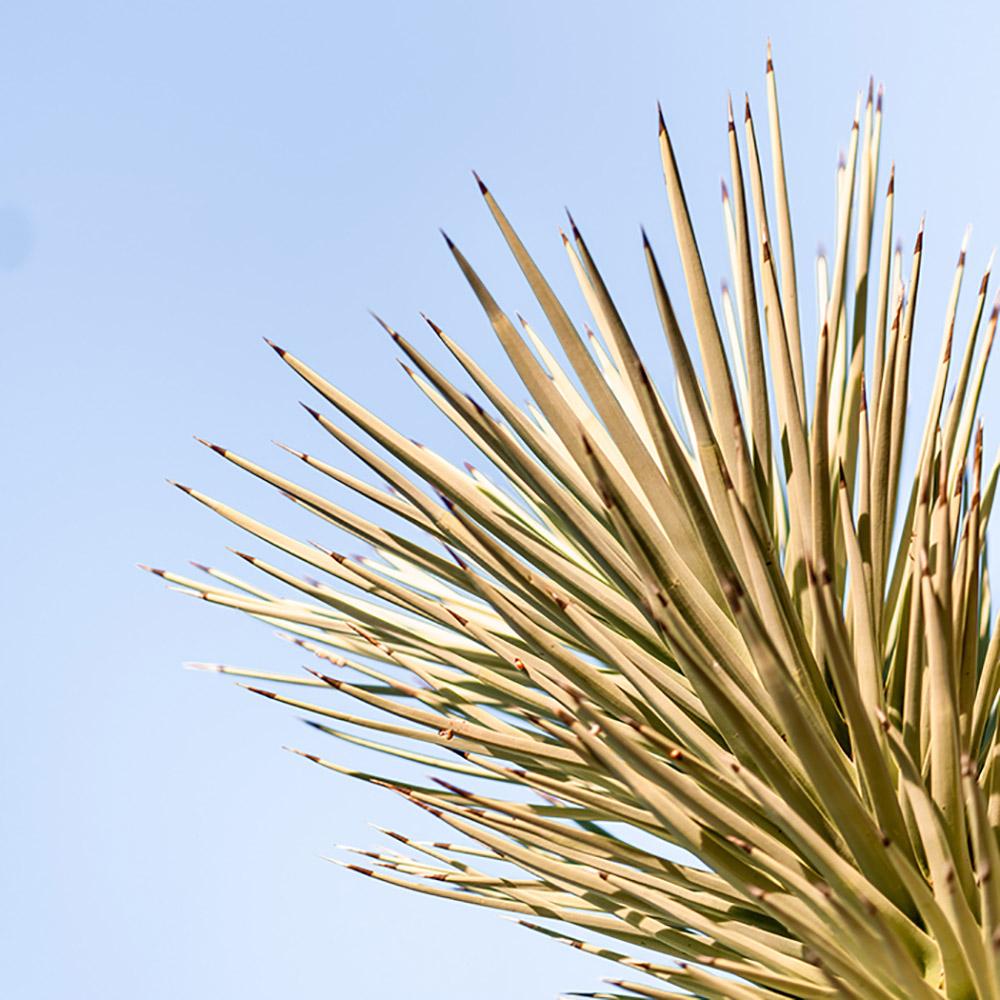Scenes from around Joshua Tree National Park