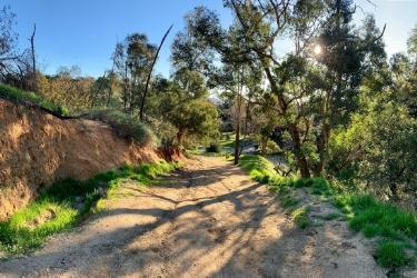View of one of the trails inside the Griffith Park