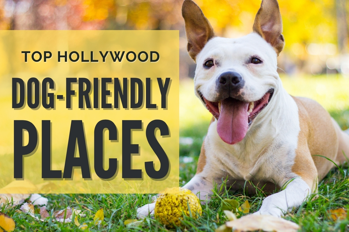 Happy dog at the park - Top Hollywood Dog Friendly Places