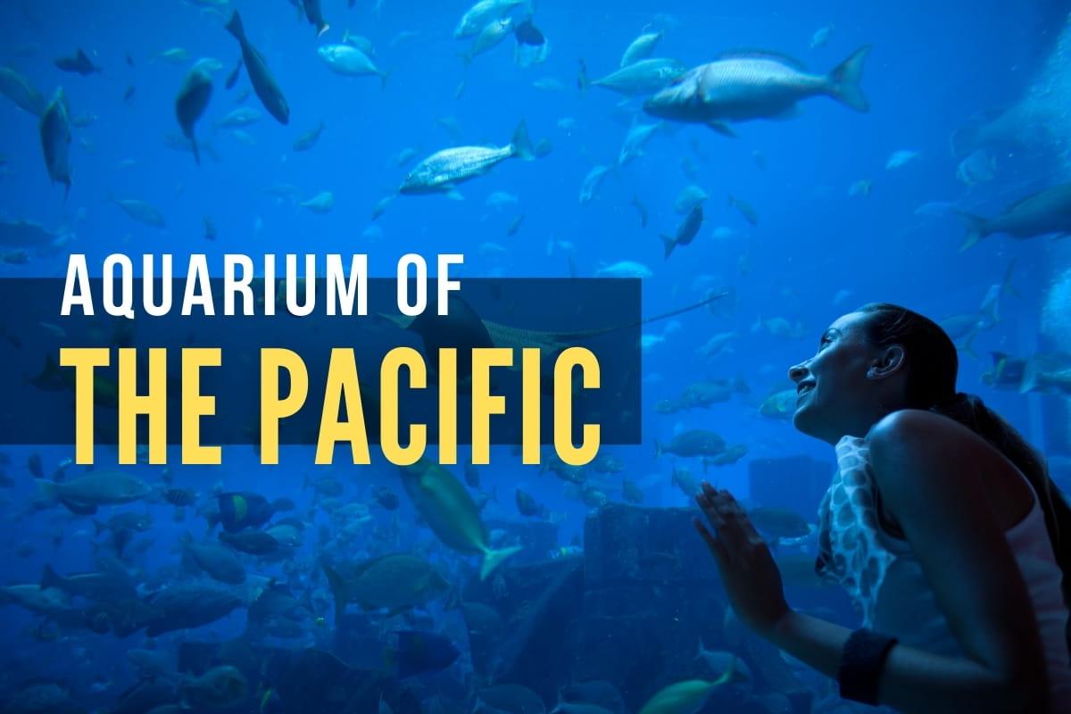 Woman at the aquarium - AQUARIUM OF THE PACIFIC