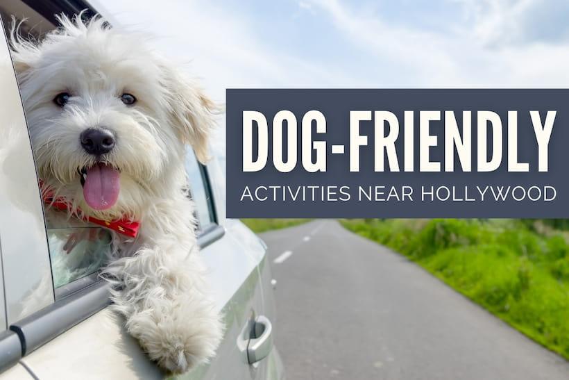 Dog-Friendly Activities Hollywood - Dog inside a car