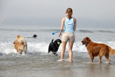 Woman with dogs at the beach