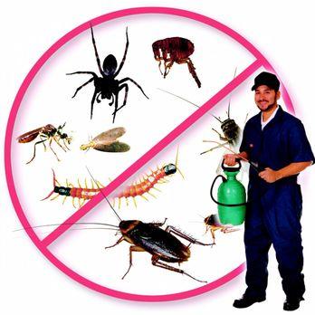 pest control in Carmichael CA
