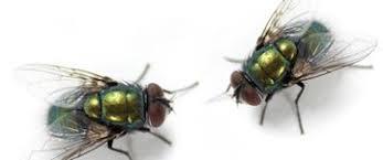 Fly Exterminator in Sacramento Ca