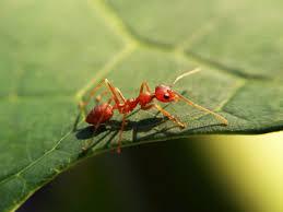Ant Exterminator Sacramento