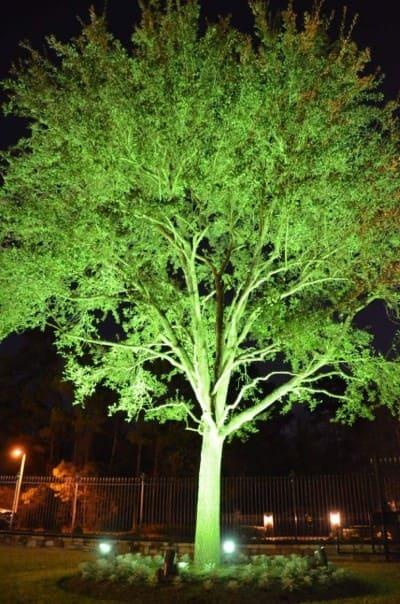 Tree Landscape Lighting Company Magnolia Texas