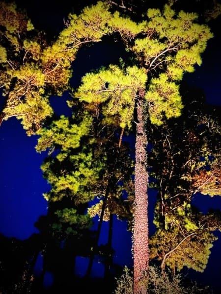 Tree Landscape Lighting Company The Woodlands Texas