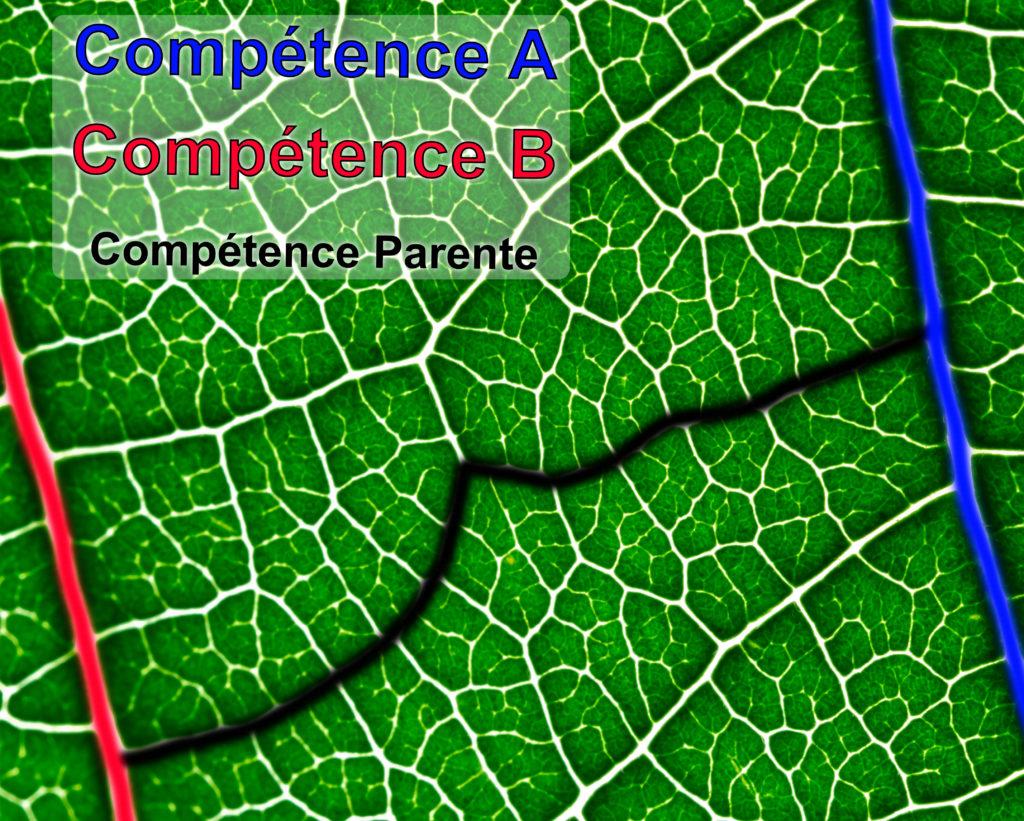 Nervure cognitive : la liaison entre deux compétences. Tel les nervures d'une feuille, les compétences se croisent et se rejoignent.