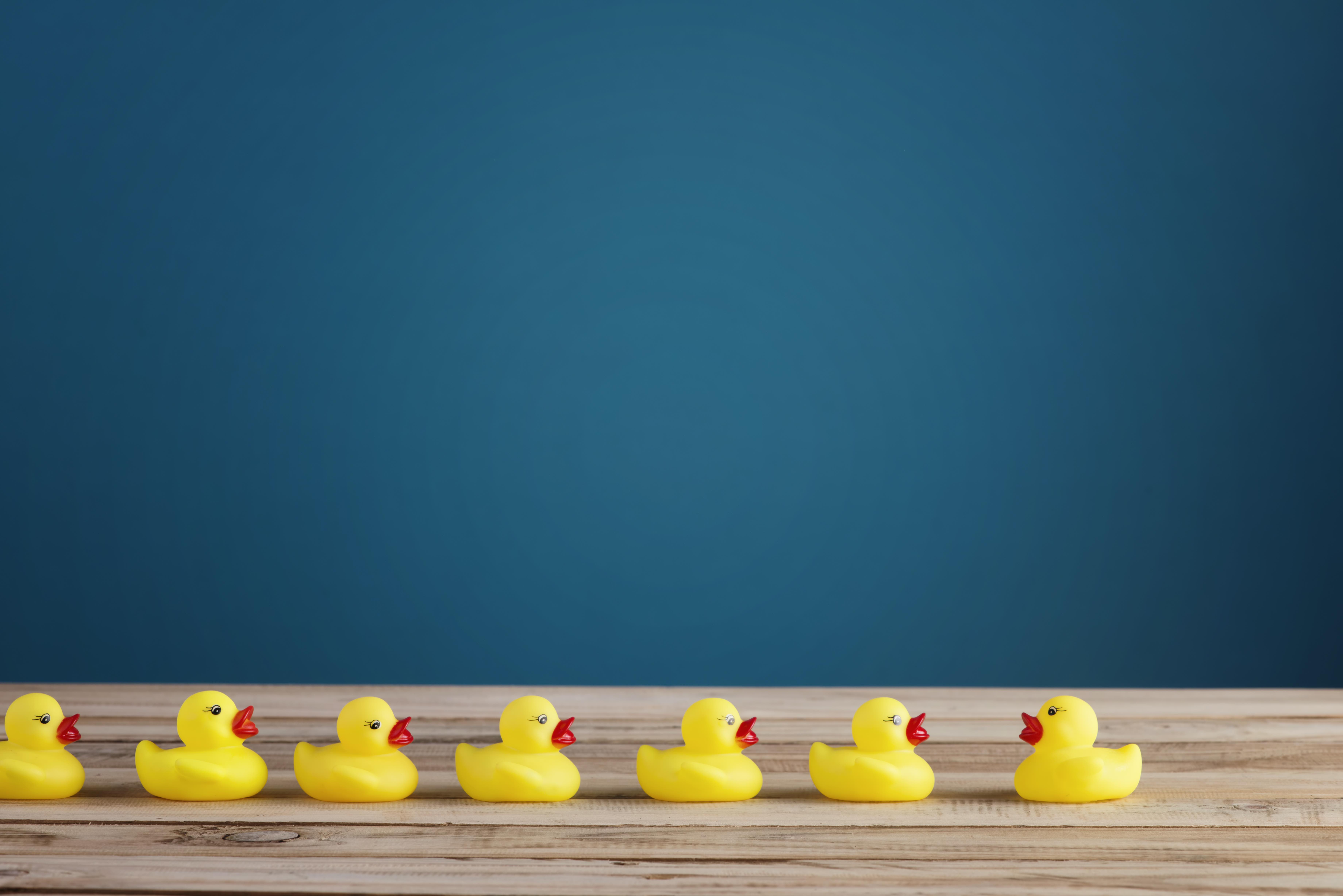 row-of-toy-rubber-ducks