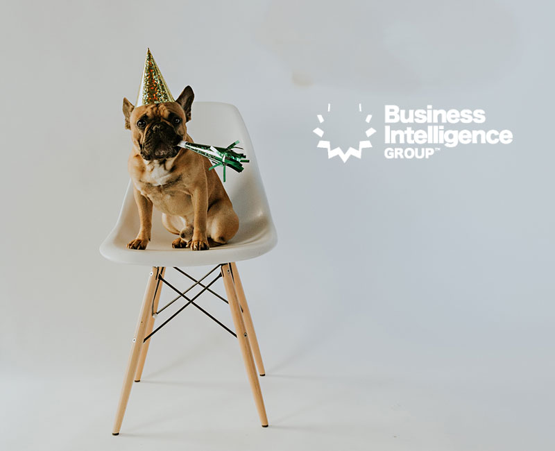 dog-dressed-to-celebrate-sits-on-chair
