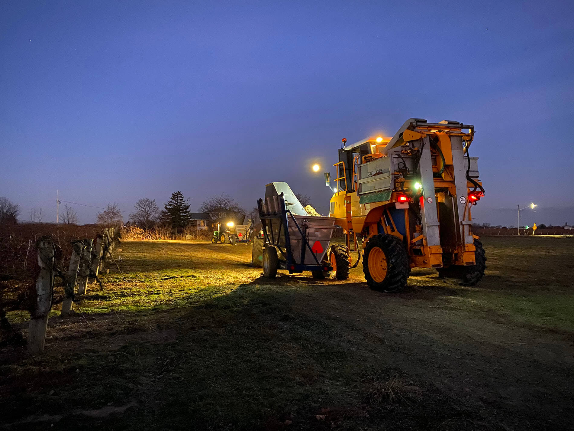 Icewine - harvest at night