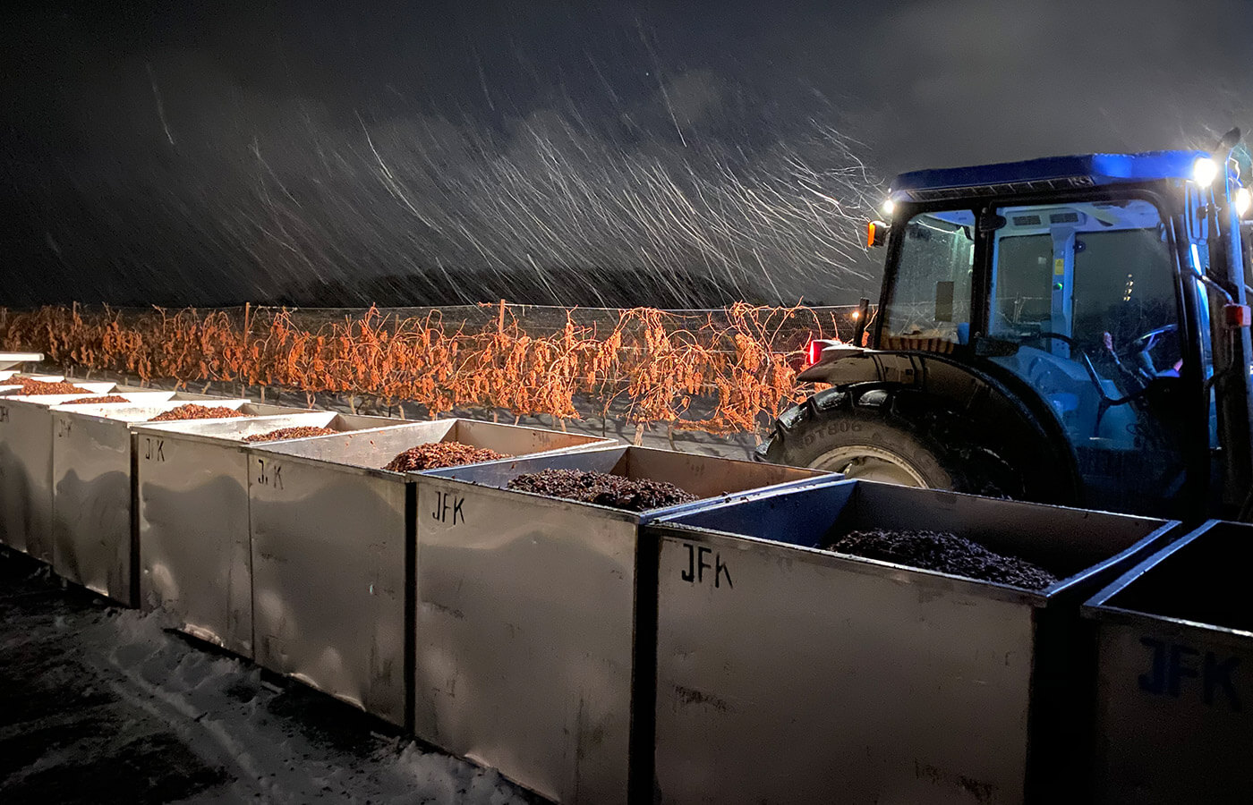 Icewine harvest