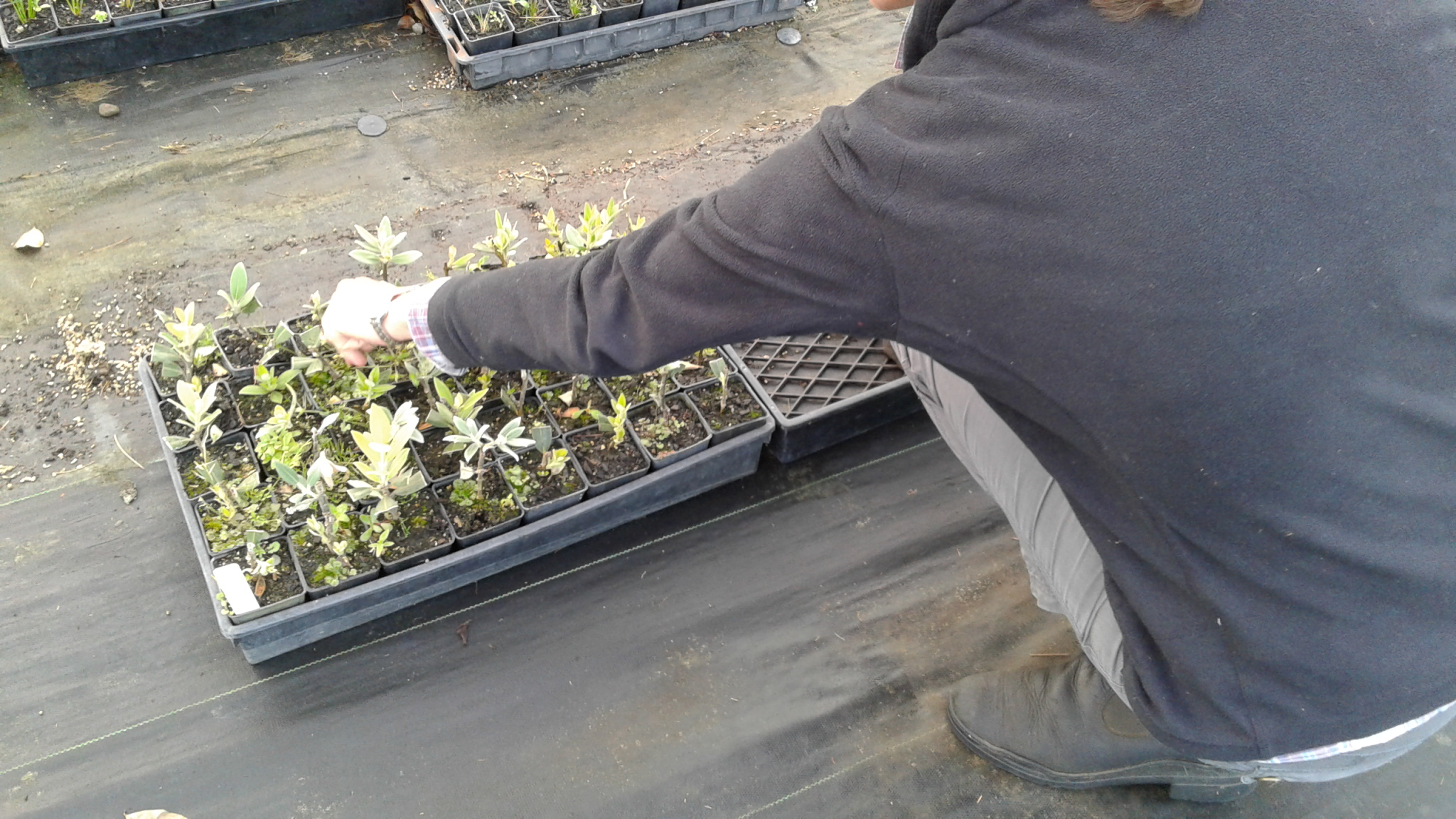 Julia shows off her Pohutakawa cuttings, grown at IDEA Services Atawhai plant nursery near New Plymouth.