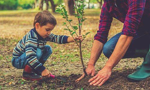 Plant a native tree