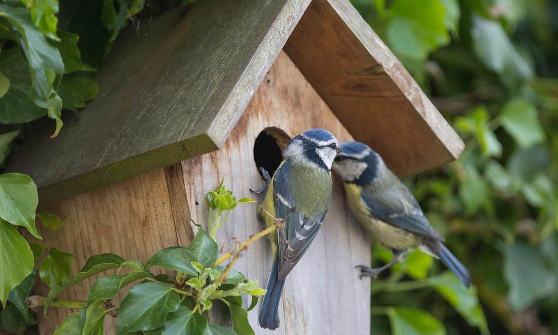 Install a bird box