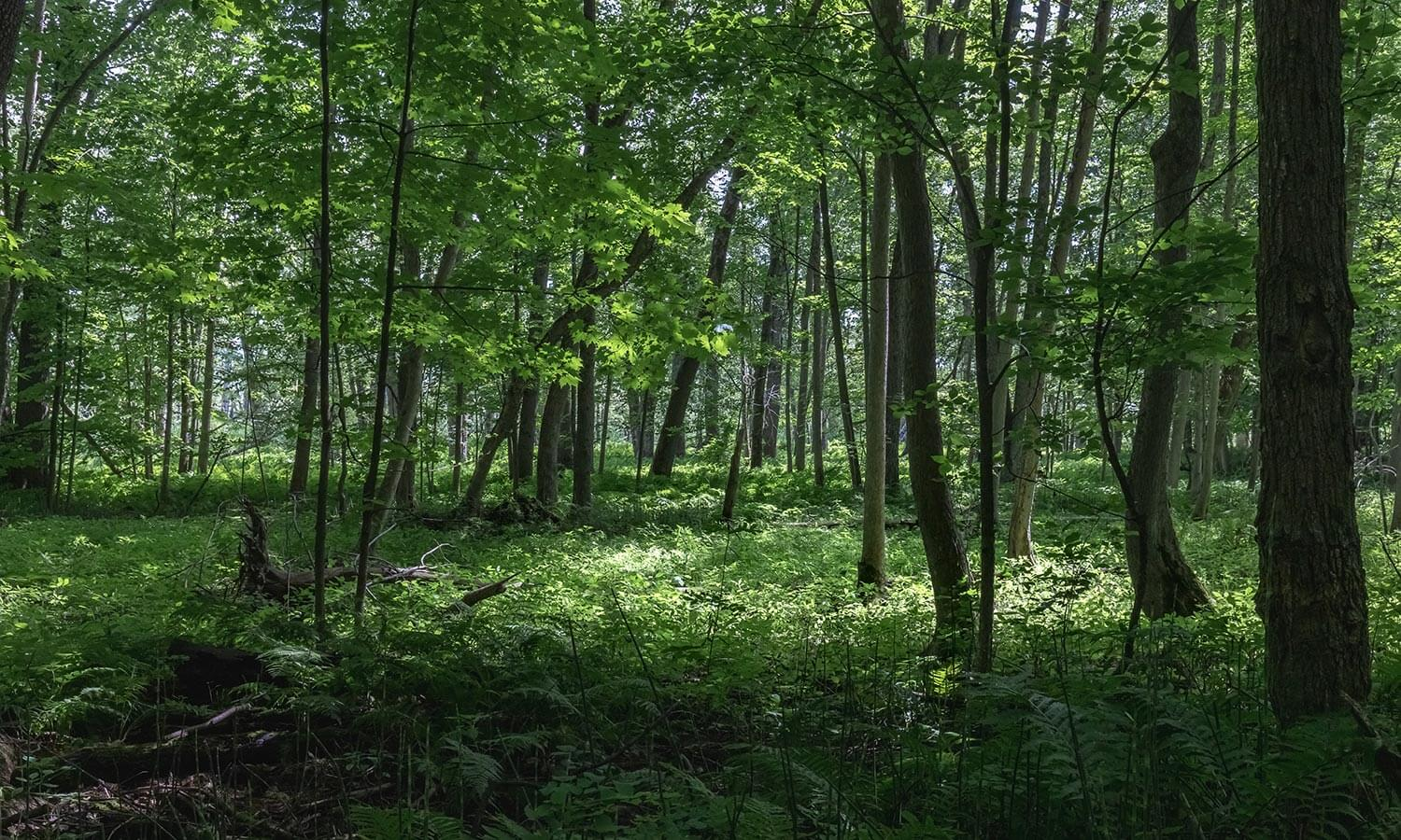 The Top 5 Reasons Why Trees are Vital