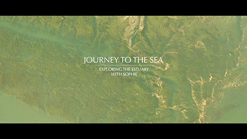 Episode 3: Exploring the estuary with Sophie