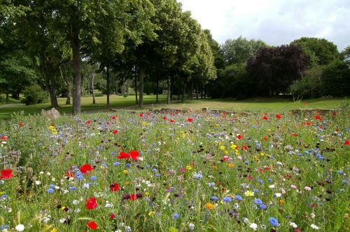 Create a wildflower patch