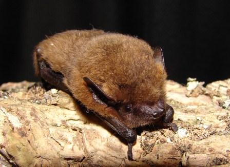 Install a bat box