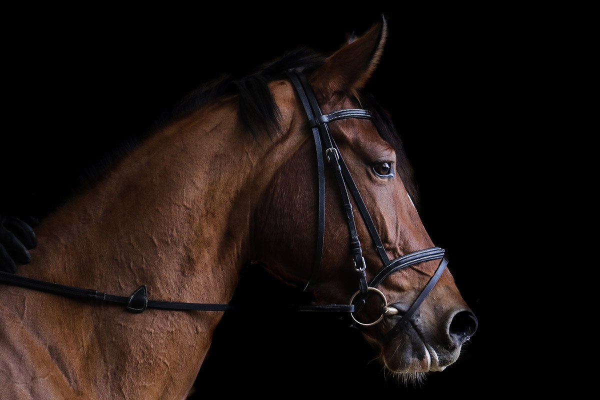 TAF cheval