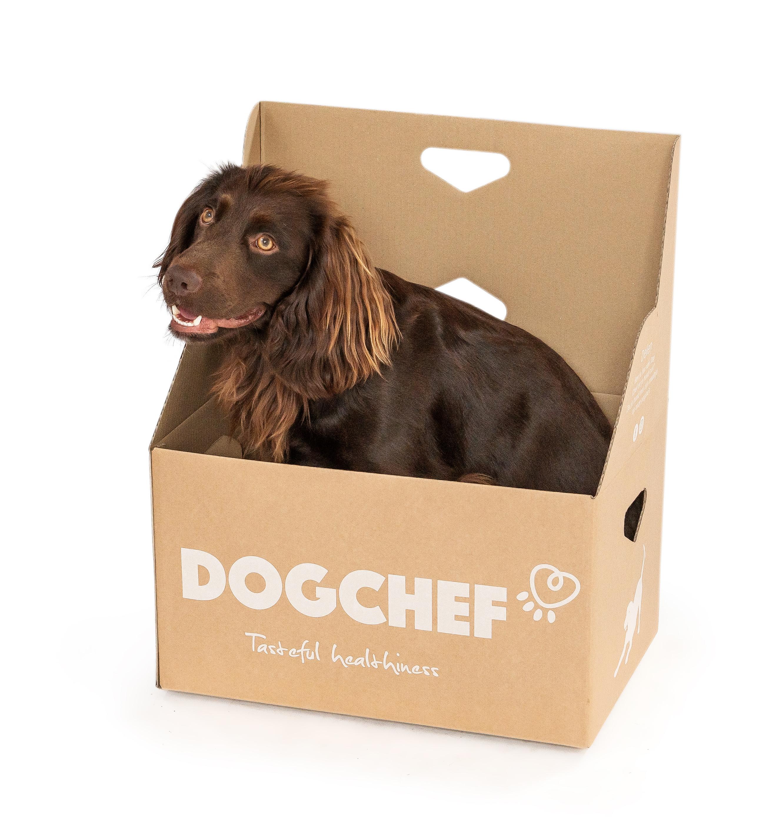 Chien dans box Dog Chef