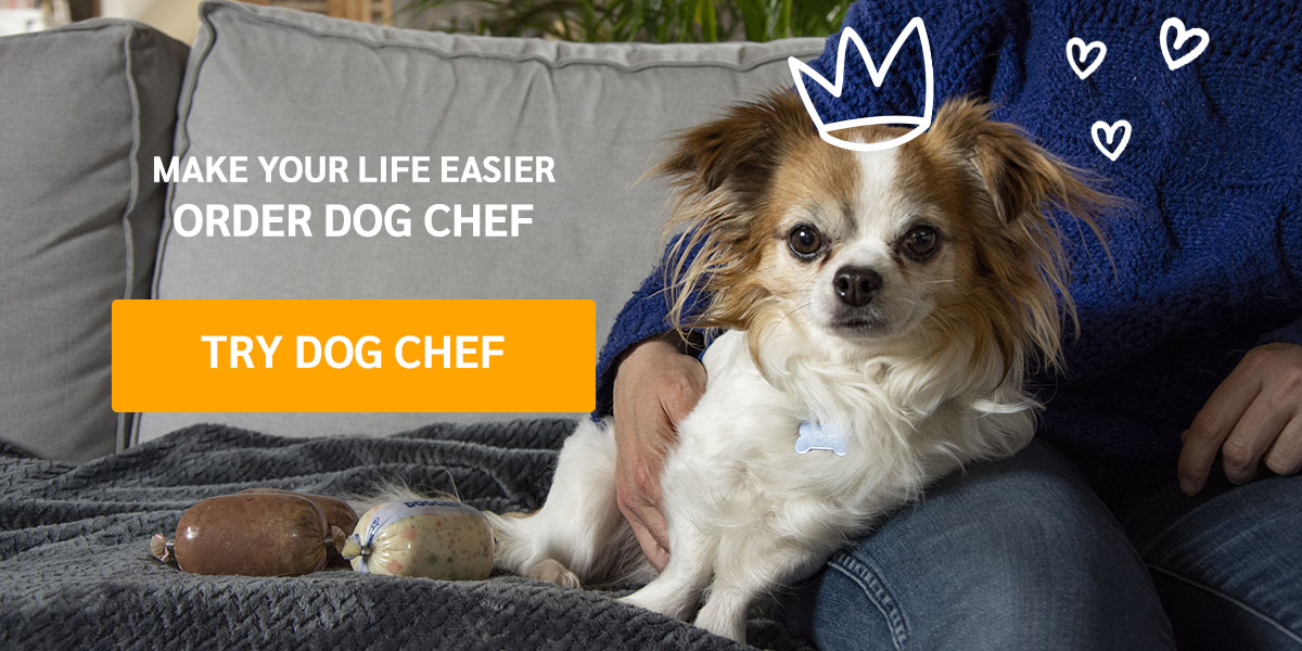 Try Dog Chef today and get 20% off