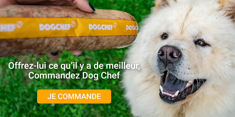 Commandez Dog Chef