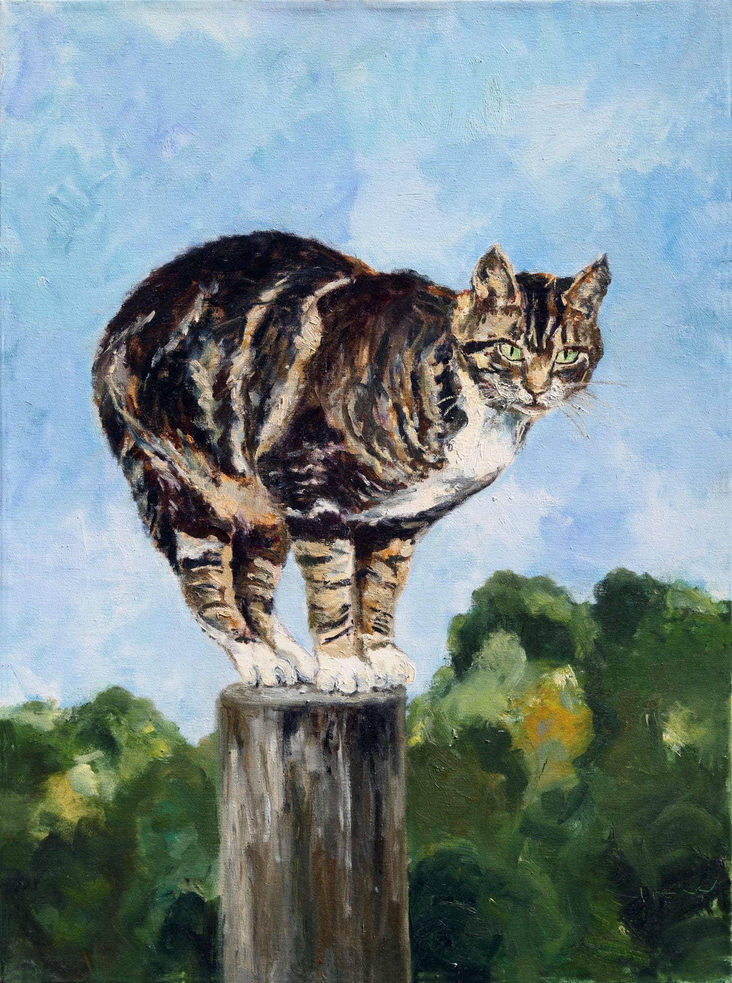 Katze Minka