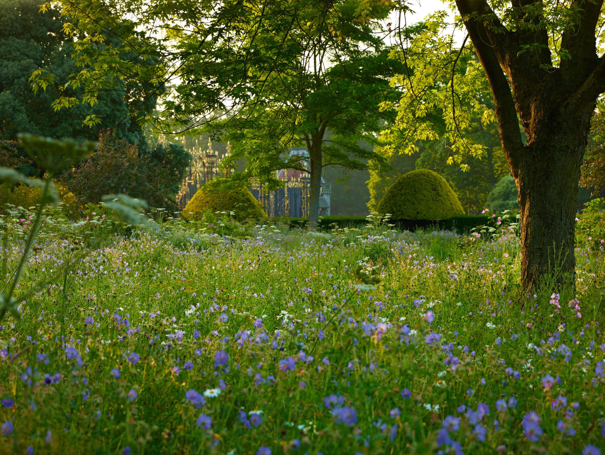 Garden in Cheshire