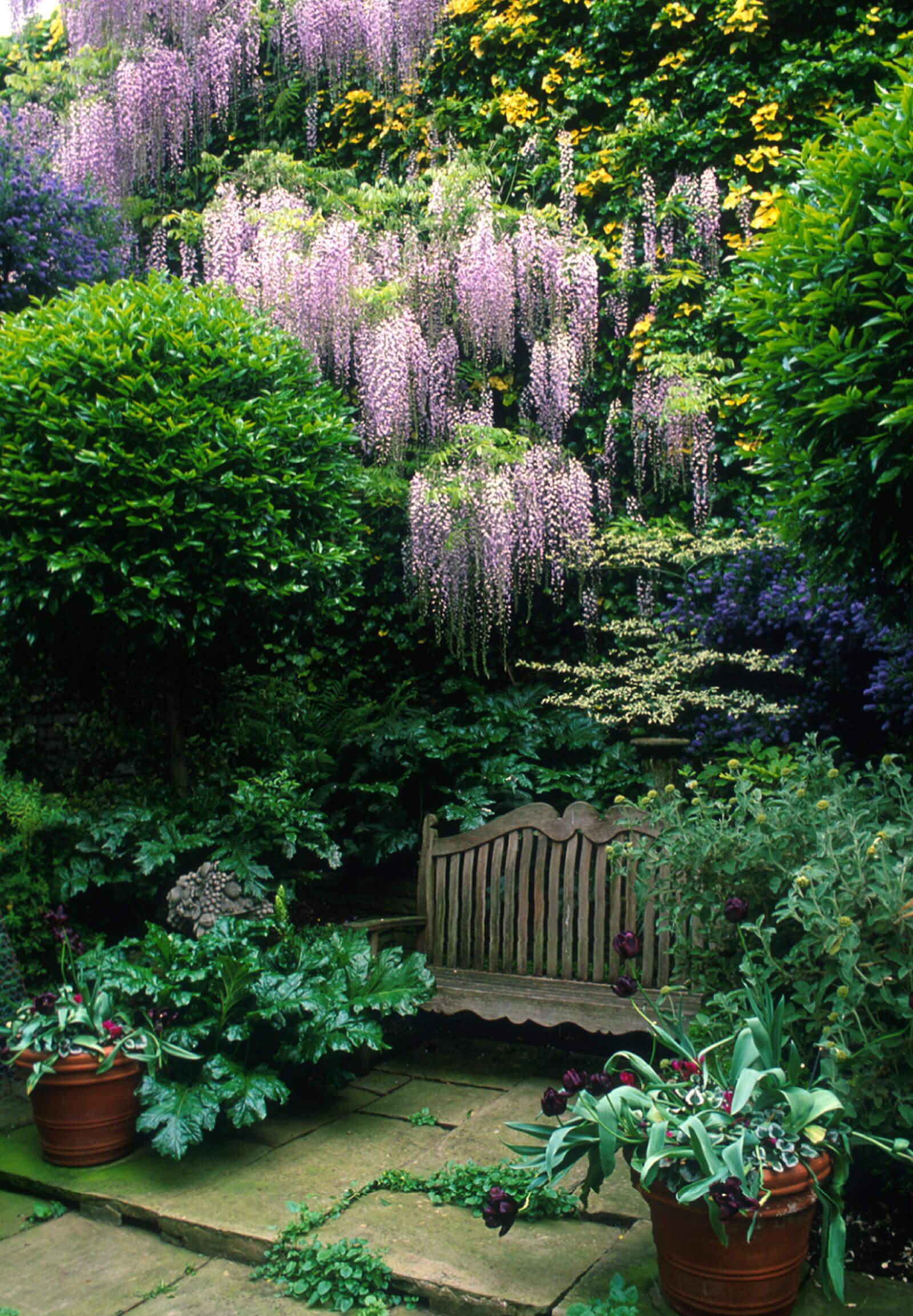 Garden in Pimlico, London
