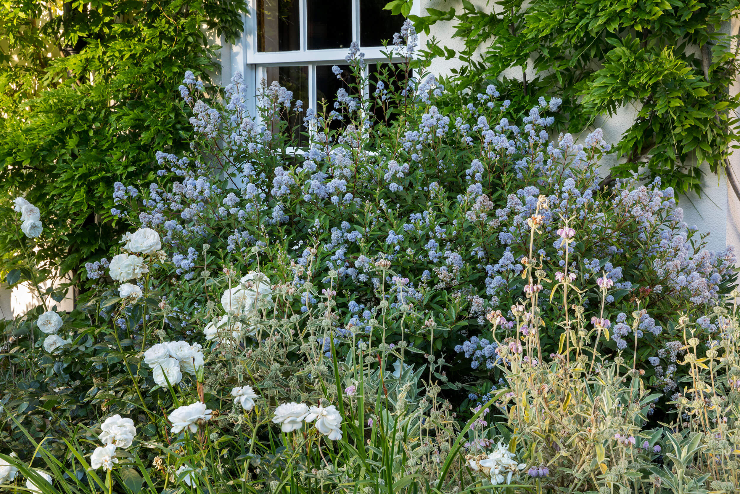 Garden in Isle of Wight