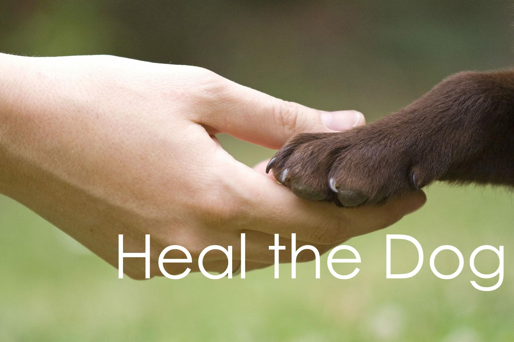 Heal The Dog