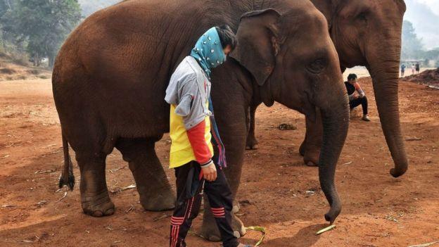 Тайські слони