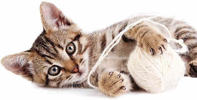 Veterinary Care for Cats at Animal Care Clinic in Canton, OH