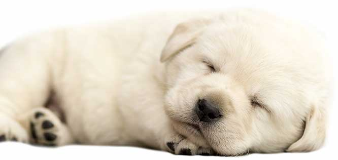 Veterinary Care for Dogs at Animal Care Clinic in Canton, OH