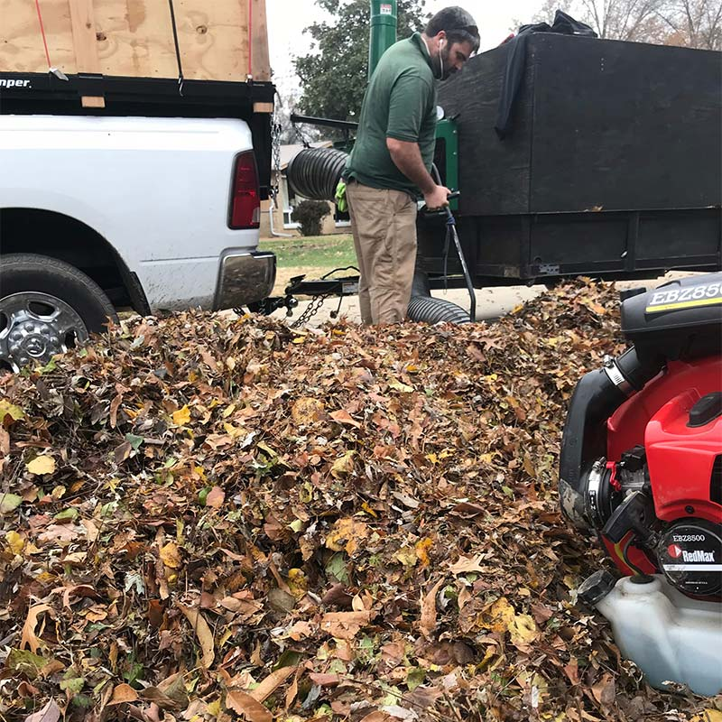Leaf clean up in St. Louis, MO