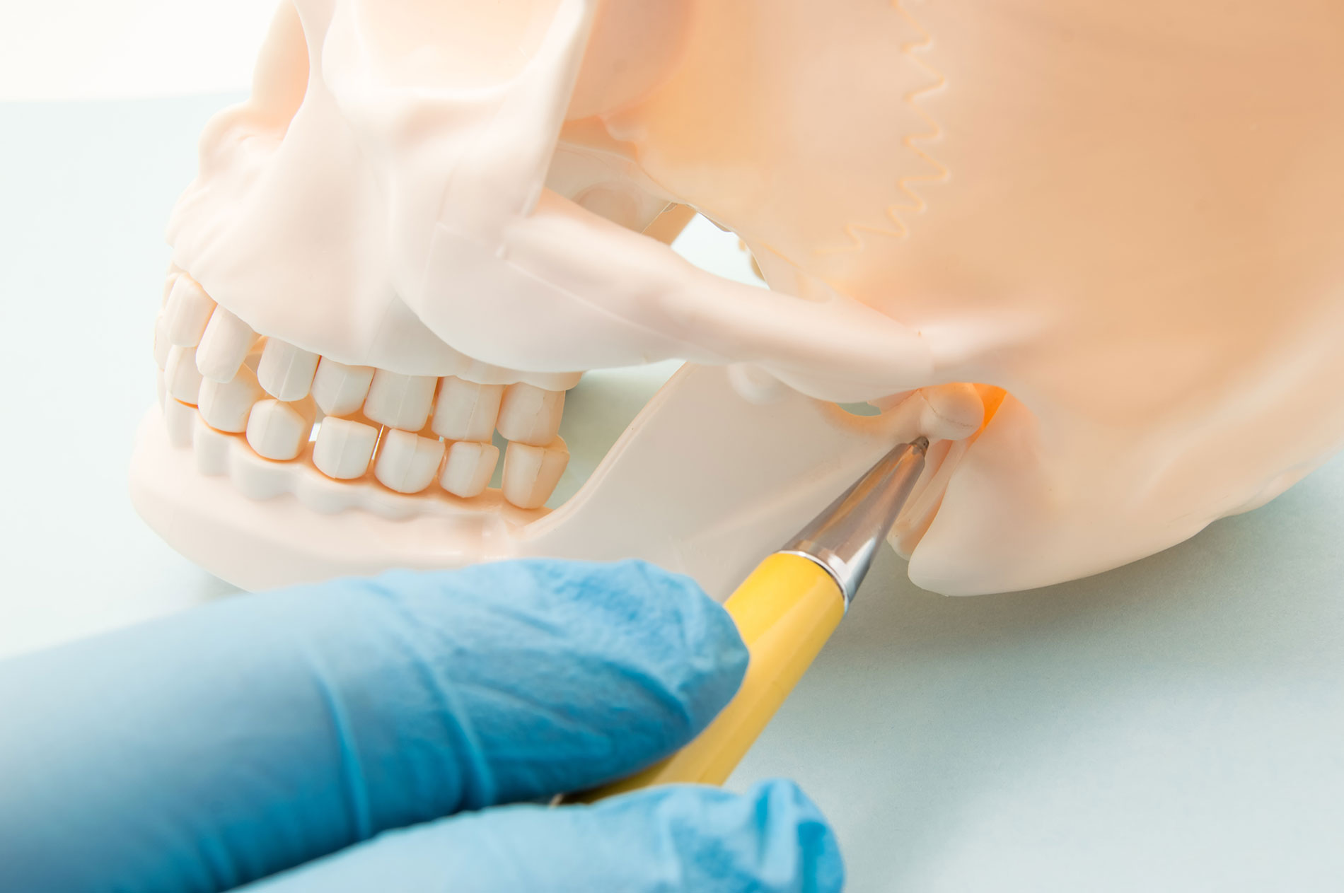 Temporomandibular joint (TMJ, joint of the lower jaw) and the ear canal