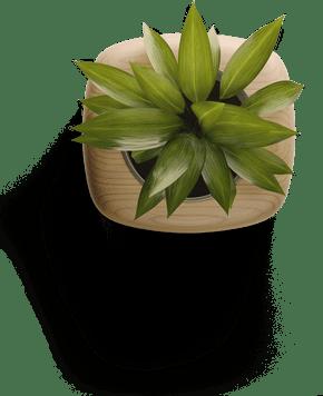 hero small plant