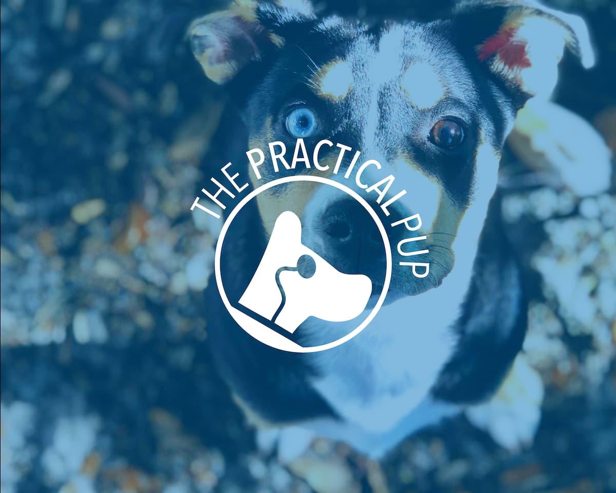 custom logo design dog with monocle