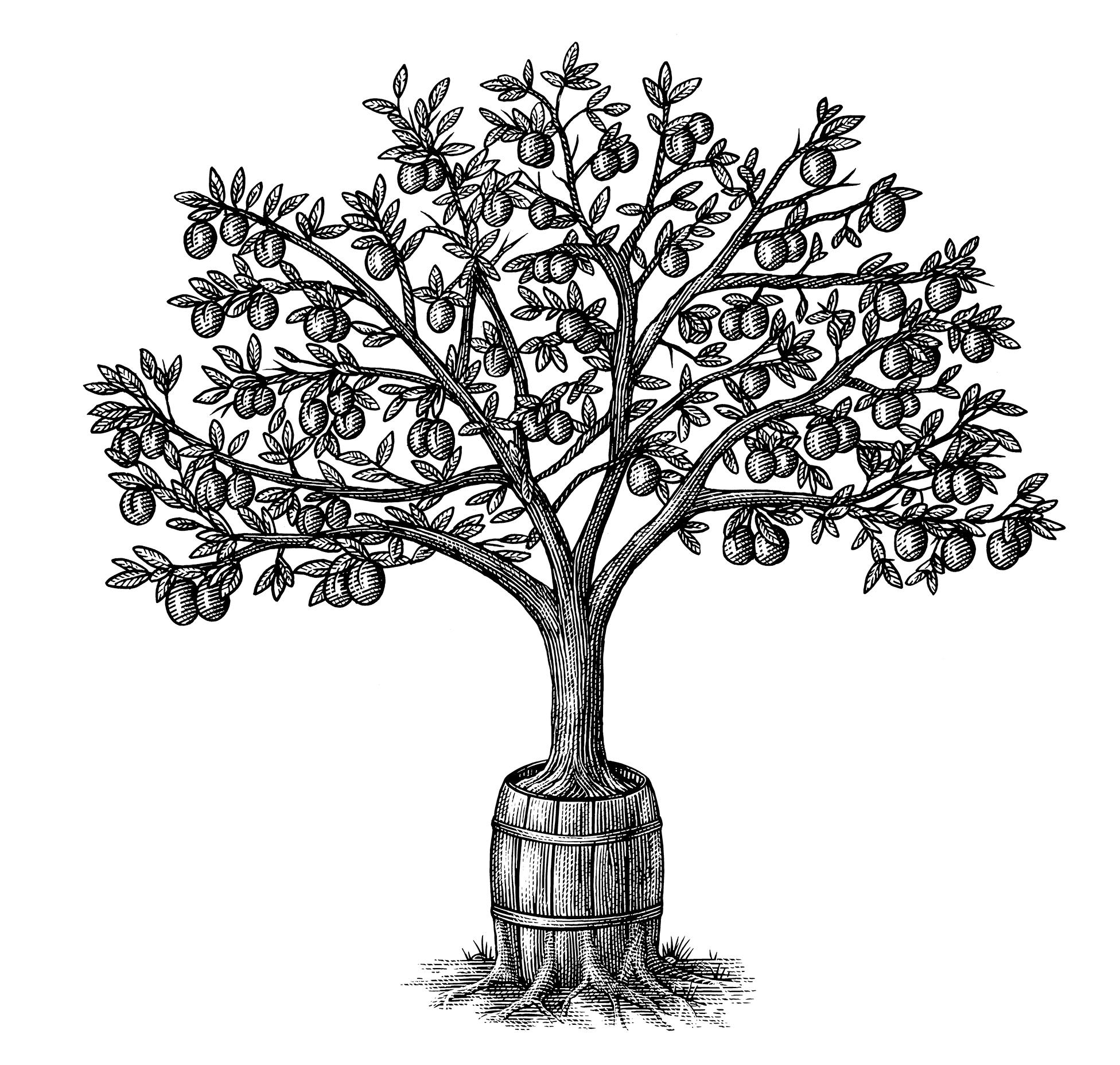 Plumwood Barrel Aged Bourbon