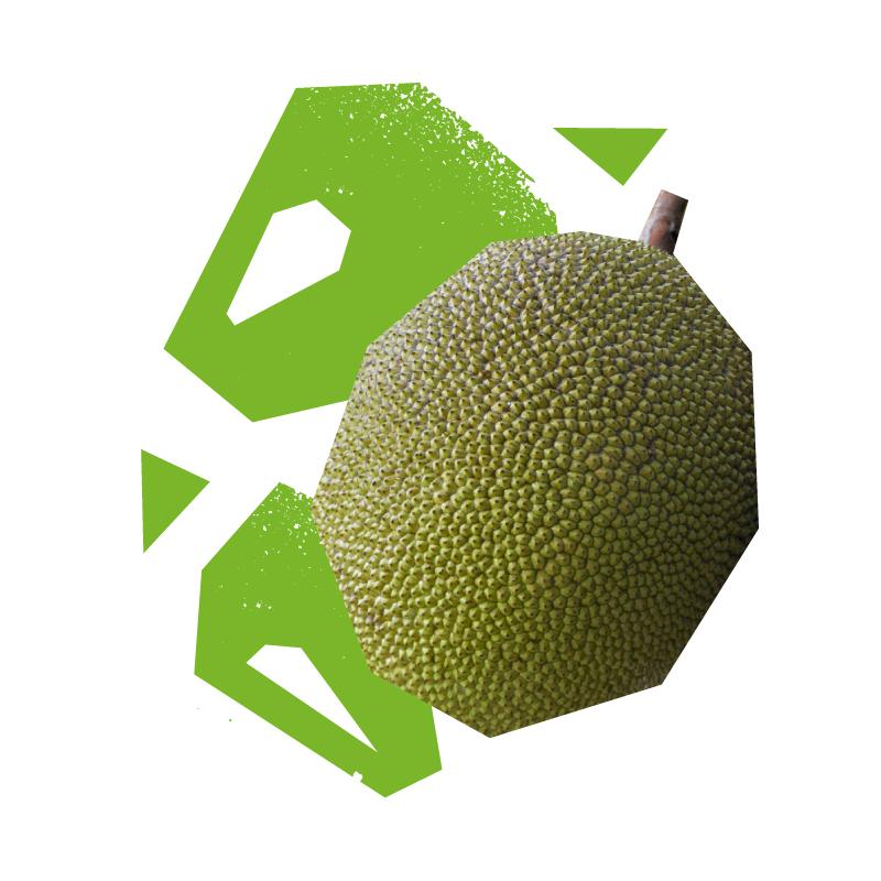 uncut-young-jackfruit
