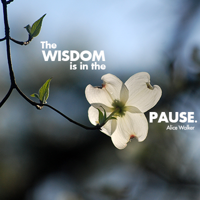 Wisdom in the Pause