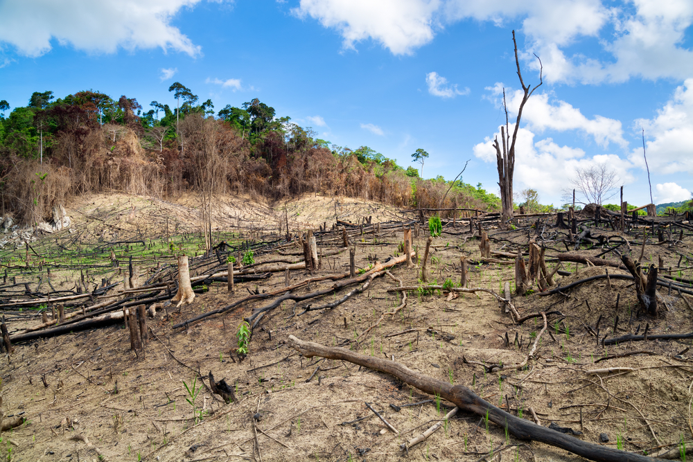 A deforested field