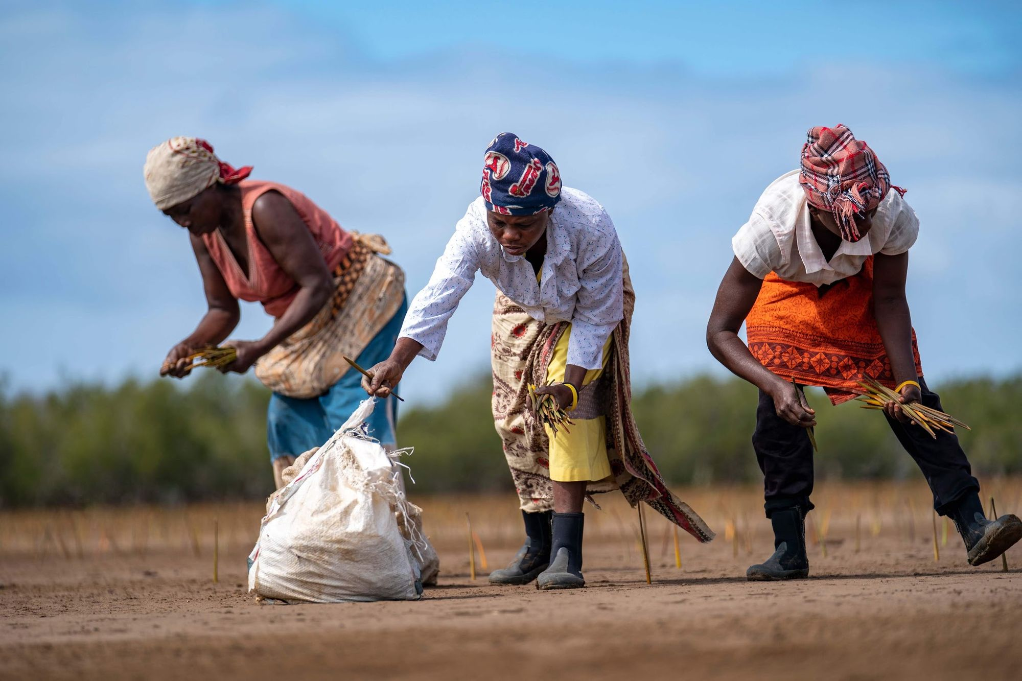 Eden employees planting trees