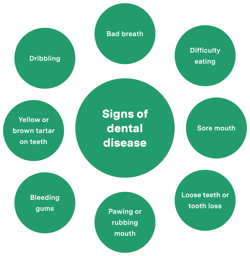 Signs of dental disease wheel chart leading factors