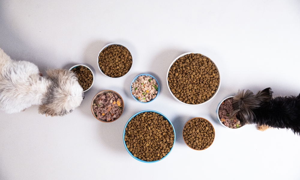Yorkie and Shih Tzu eating Kabo beef meal surrounded by kibble on white background